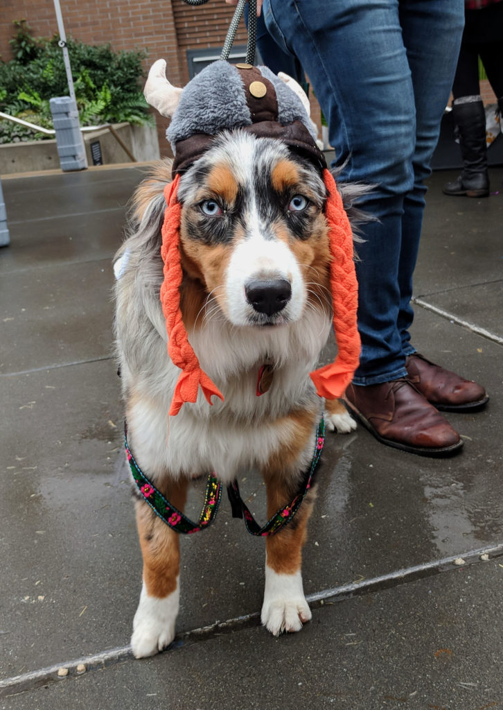 Downtown Dog Lounge hosts its third Barktoberfest for pups and their people.