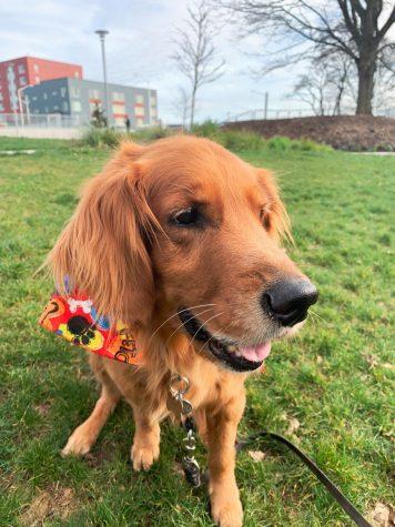 Happy dog chilling at Yesler Terrace Neighborhood Park